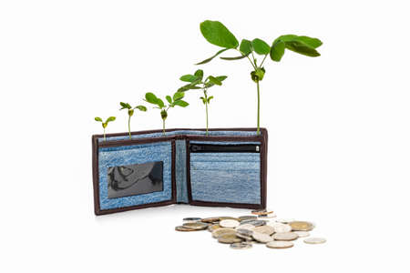 Jean cloth wallet is opened and standed on white background with the growing tree inside it in business money saving concept in studio light.
