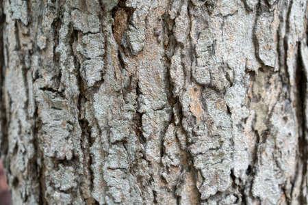 close up to the Bark of the tree 版權商用圖片