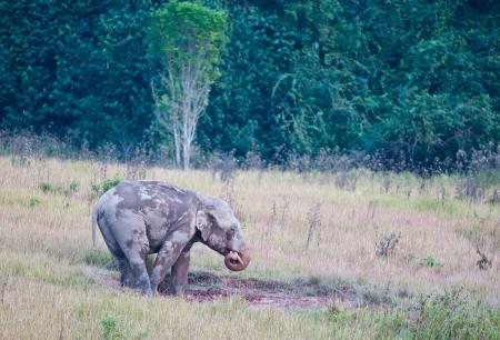 Thai Elephant di fondo sulla natura