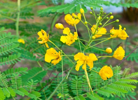 yellow flower on nature background
