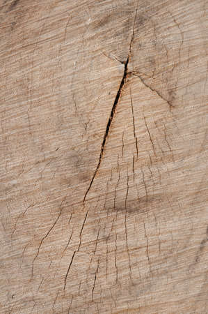 abstract background  of tree stump