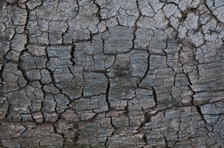 charred: Black wood texture of burnt tree after fire Stock Photo