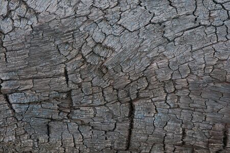 black wood texture: Black wood texture of burnt tree after fire Stock Photo