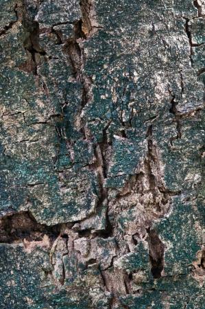 astratto albero corteccia trama Archivio Fotografico