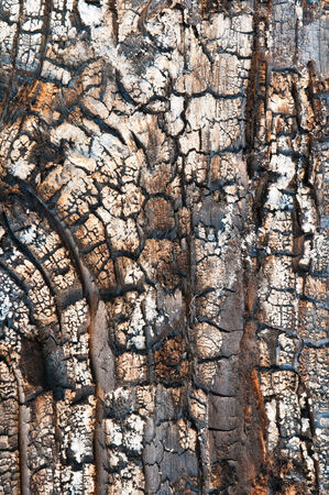 Black wood texture of burnt tree after fire Stock Photo