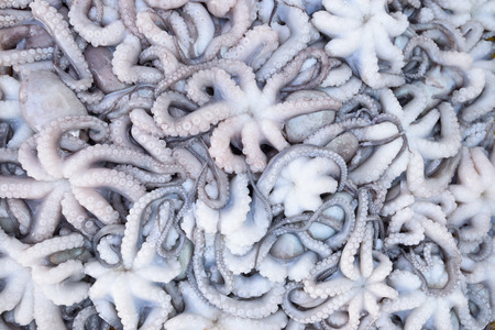 Squid that were sold in the market photo