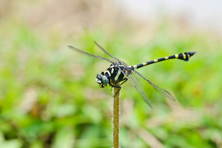 green black dragonfly on nature background Stock Photo