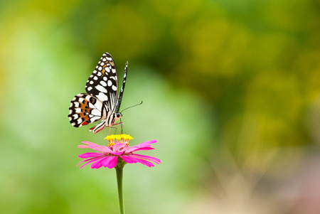 calce farfalla sul fiore da vicino
