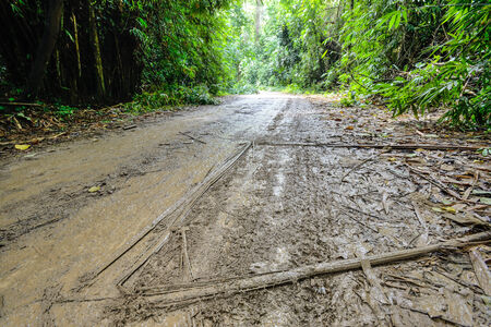 Wet dirt road in rain forest photo