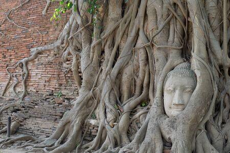 cabeza de buda: Buda cabeza encerrada en las raíces del árbol