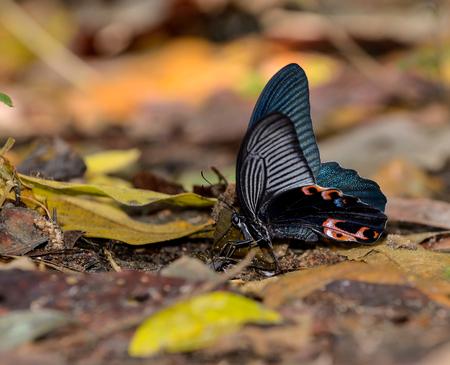 spangle: Spangle butterfly on nature background Stock Photo