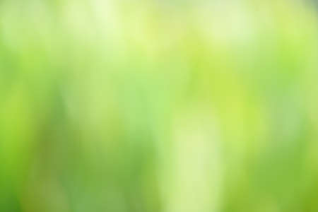 focus on background: abstract background of green leaf out of focus Stock Photo