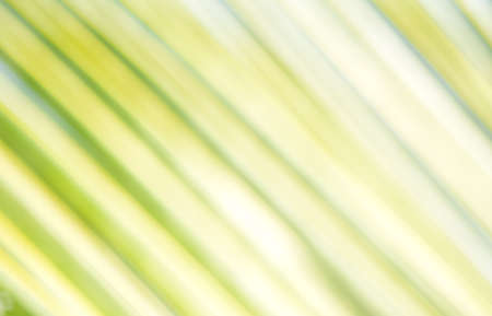 abstract background of coconut leaf out of focus Stock Photo