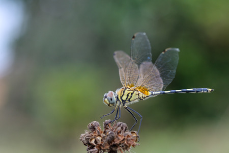 yellow dragonfly on nature background