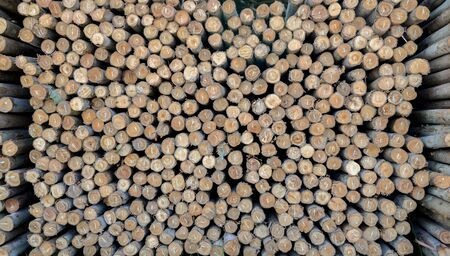 Wood  background have  cut from big tree and small tree Stock Photo