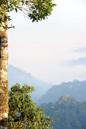 tree on  fog in the valley background