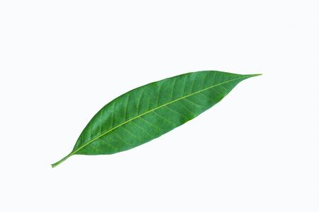 colorful young leaf tree on white background