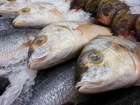 Snapper fish on ice in the fresh market.