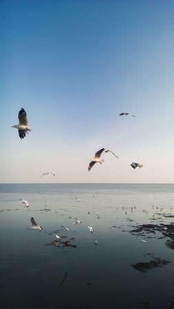 Beautiful seagulls soaring in the blue sky Stock Photo