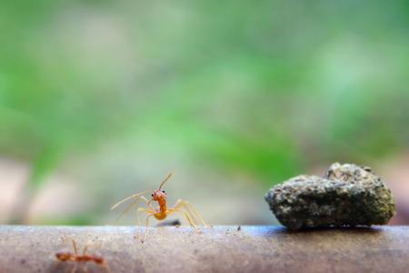 hormiga hoja: Hormiga minúscula Macro mundo, ambiente selectivo se centran en la hoja de antecedentes