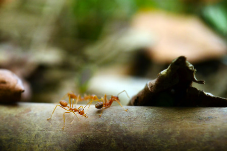 hormiga hoja: Hormiga min�scula Macro mundo, ambiente selectivo se centran en la hoja de antecedentes