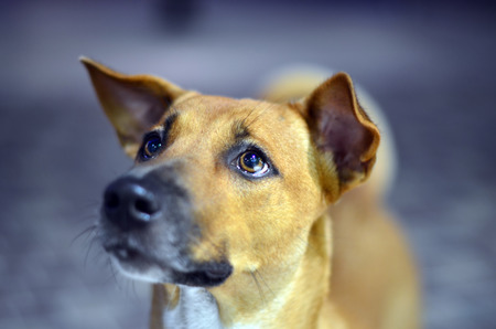 lindo: Hungry dog looking for foodowner - emotional eye