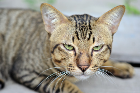animal lover: Close-up view of cats eye Selective focus - Animal lover background Foto de archivo