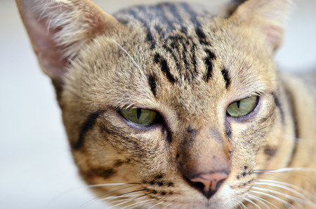 animal lover: Close-up view of cats eye Selective focus - Animal lover background Stock Photo