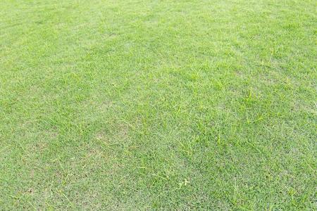 green land: Grass background in Bhuddhamonthon garden, Nakhon Pathom, Thailand