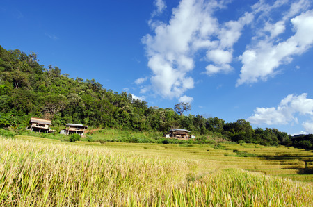 doi: Baan Pa Bong Pieng View of rice farm and cloudy blue sky by local people in mountain, northern part of Thailand