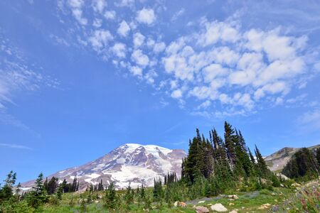 View of grass in front of mount rainier national park USA
