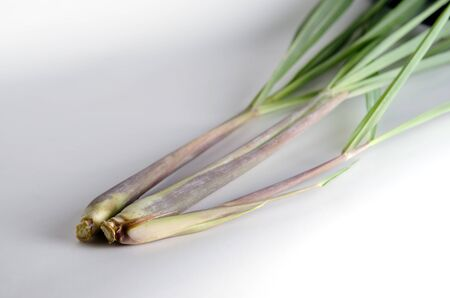 lemongrass: Lemon grass (Other names are lemongrass, barbed wire grass, silky heads, citronella grass, cha de Dartigalongue, fever grass, tanglad, hierba Luisa, or gavati chah) isolated on white background