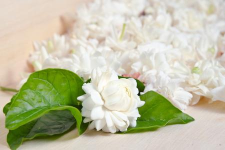 jessamine: Jasmine (Other names are Jasminum, Melati, Jessamine, Oleaceae) flowers grouped on wooden board background