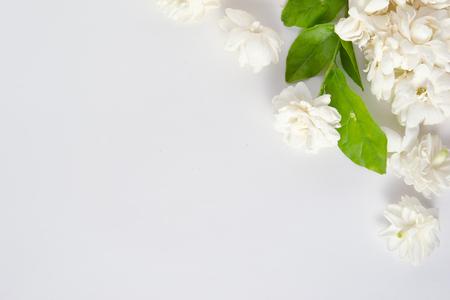 jessamine: Jasmine (Altri nomi sono Jasminum, Melati, Jessamine, Oleaceae) fiori isolati su sfondo bianco per uso grafico