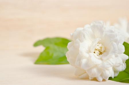 jessamine: Jasmine (Other names are Jasminum, Melati, Jessamine, Oleaceae) flower isolated on wooden board