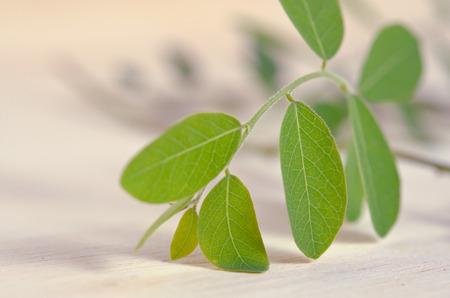 hum: Moringa (Other names are Moringa oleifera Lam., MORINGACEAE, Futaba kom hammer, vegetable hum hum bug, bug Hoo) leaves on wooden board background Stock Photo