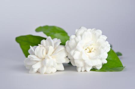 jessamine: Jasmine (Other names are Jasminum, Melati, Jessamine, Oleaceae) flowers isolated on white background for graphic usage