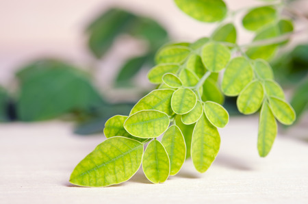 hum: Moringa (Other names are Moringa oleifera Lam., MORINGACEAE, Futaba kom hammer, vegetable hum hum bug, bug Hoo) leaf on wooden board background Stock Photo