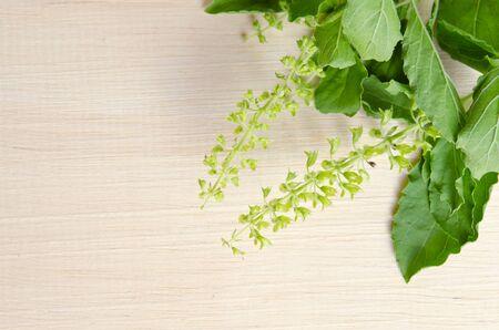 basil  leaf: Basil leaf isolated on wooden board background Stock Photo