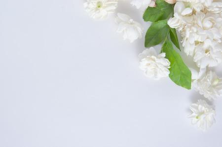 jessamine: Jasmine (Altri nomi sono Jasminum, Jasmine Melati, Jessamine, gelsomino Oleaceae) fiori messi su sfondo bianco Archivio Fotografico
