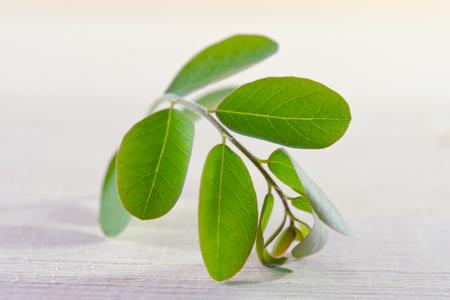 Moringa (Other names are Moringa oleifera Lam., MORINGACEAE, Futaba kom hammer, vegetable hum, Moringa hum bug, Moringa bug Hoo) leaf on wooden board background