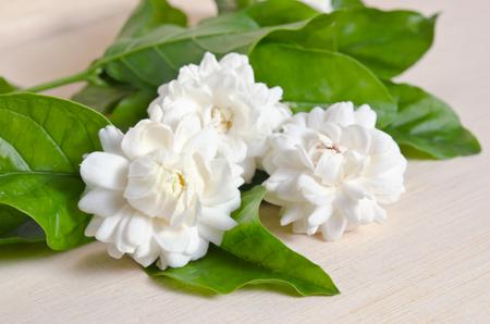 jessamine: Jasmine (anche conosciuto come Jasminum, Melati, Jessamine, Oleaceae gelsomino) fiori raggruppati a bordo di fondo in legno