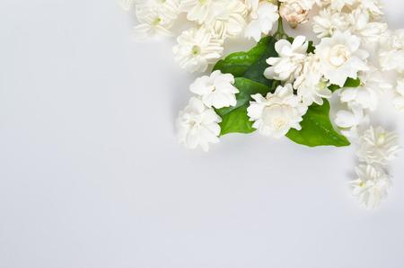 jessamine: Jasmine (Altri nomi sono Jasminum, Melati, Jessamine, Oleaceae gelsomino) fiori isolati su sfondo bianco vista dall'alto Archivio Fotografico