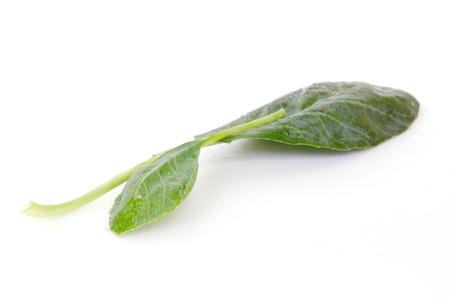 kana: Chinese Kale vegetable (Other names are Chinese Broccoli, Kale, Kai lan, Gai lan, Phak, Khana, Pak , kana, alboglabra, Brassica oleracea) isolated on white background good for Cantonese cuisine menu