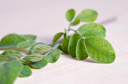hum: Moringa (Other names are Moringa oleifera Lam., MORINGACEAE, Futaba kom hammer, vegetable hum, Moringa hum bug, Moringa bug Hoo) leaf on wooden board background