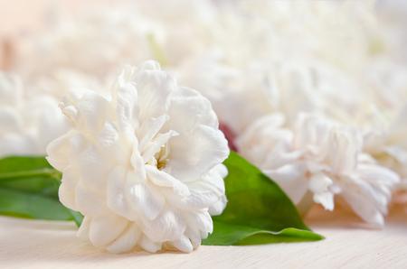 jessamine: Jasmine (Altri nomi sono Jasminum, Melati, Jessamine, Oleaceae gelsomino) fiori raggruppati a bordo di fondo in legno