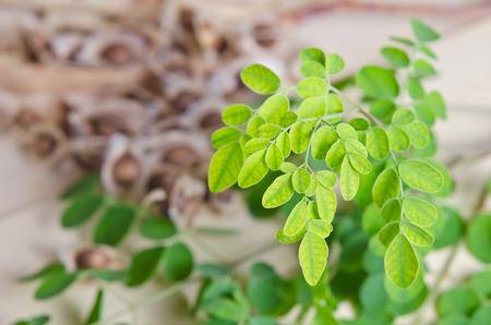 Moringa (Also known as Moringa oleifera Lam., MORINGACEAE, Futaba kom hammer, vegetable hum hum bug, Moringa bug Hoo) leaf and seed