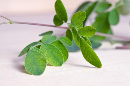 hum: Moringa (Also known as Moringa oleifera Lam., MORINGACEAE, Futaba kom hammer, vegetable hum, Moringa hum bug, Moringa bug Hoo) leaf on wooden board background