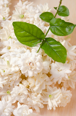 jessamine: Jasmine (Also known as Jasminum, Melati, Jessamine, Oleaceae Jasmine) flowers grouped on wooden board background Archivio Fotografico