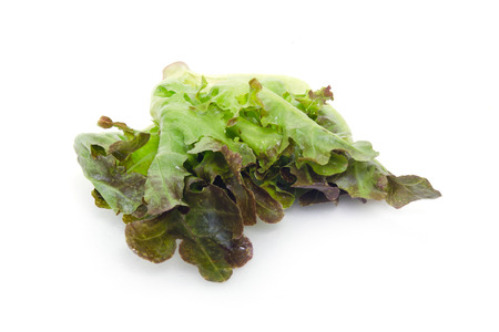Chinese Kale vegetable (Other names are Chinese Broccoli, Kale, Kai lan, Gai lan, Phak, Khana, Pak , kana, alboglabra, Brassica oleracea) isolated on white background good for Cantonese cuisine menu